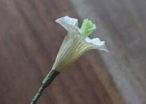 铃铛花的折法图解 皱纹纸制作铃铛花的方法
